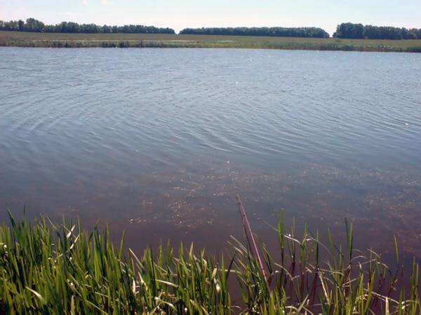 Черное озеро. Курлак впадает в Битюг